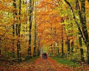 familia-caminando-por-el-parque-de-oto-o